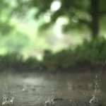 HD Background – Raindrops in Super Slow Motion, Nature Background, Free HD Loops