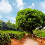 Tree HD Wallpapers and Background Images