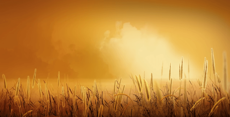 Golden wheat - Video Background HD - Landscape HD | YL Computing