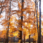 Falling Leaves Motion Background HD 1080P (Natural Color Version)