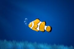 Clownfish-31