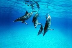 Dolphin-14