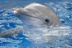 Dolphin-15