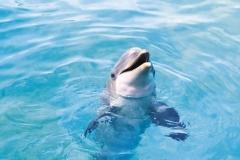 Dolphin-16