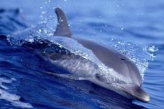 Dolphin-19