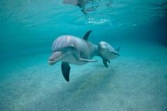 Dolphin-24