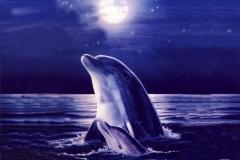 Dolphin-29