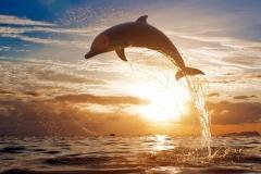 Dolphin-30