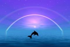 Dolphin-31