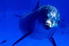 Dolphin-35