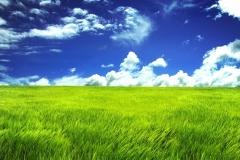 green_grassland