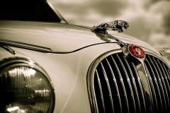 Jaguar-Logo-12