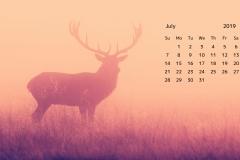 July-2019-Calendar-Wallpaper-3
