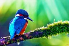 Kingfisher-21