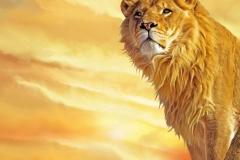 Lion-14
