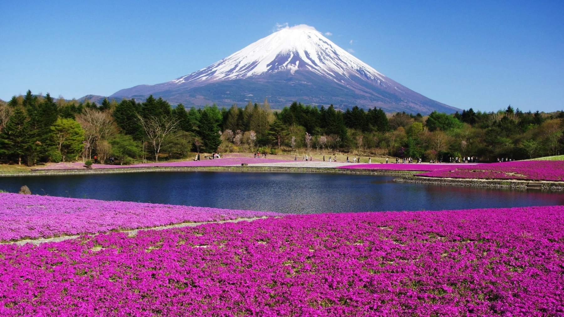 Japan Mount Fuji 2019 Hd Desktop Wallpapers Yl Computing