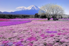 Mount-Fuji-23