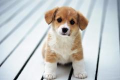 Puppies-131