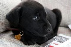 Puppies-134