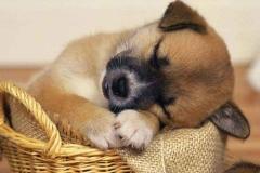 Puppies-145
