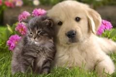 Puppies-148