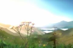 Scenery-34