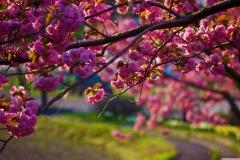Spring-Season-19