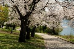 Spring-Season-20