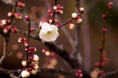 Spring-Season-26