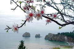 Spring-Season-32