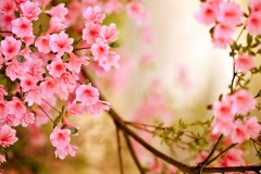 Spring-Season-33