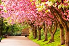 Spring-Season-34