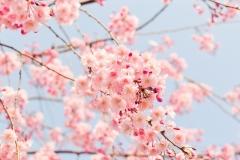 Spring-Season-35
