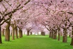 Spring-Season-37
