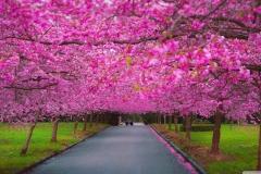 Spring-Season-39