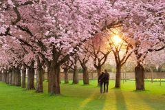 Spring-Season-40