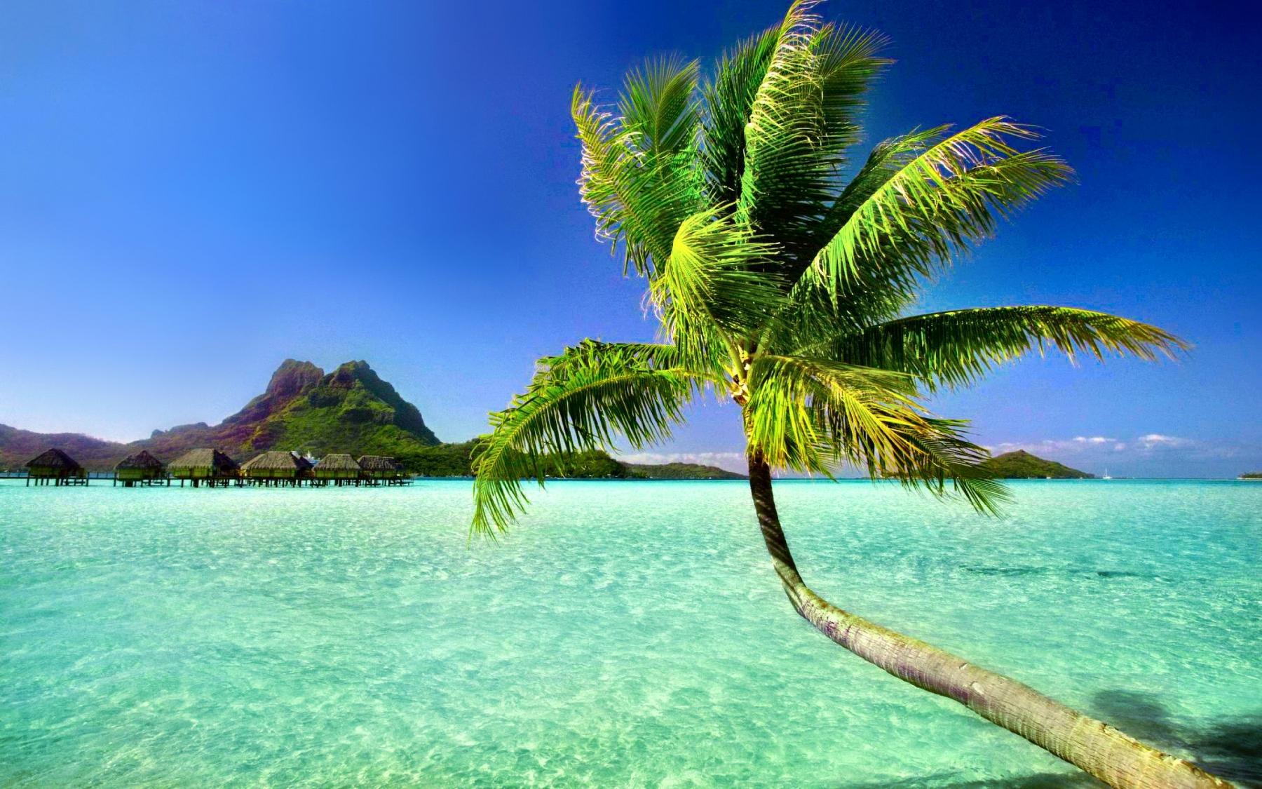 Beach Tropical HD Wallpaper Background