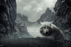 Wolf-27