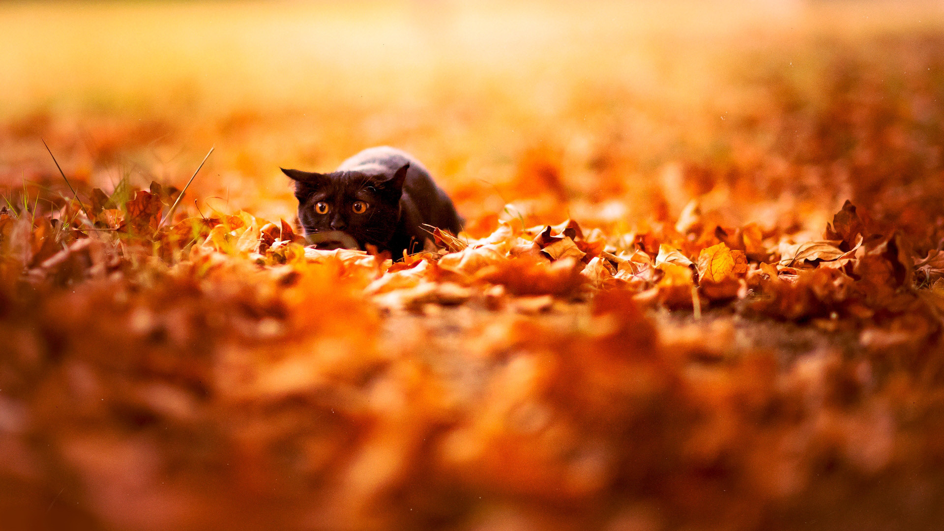1920x1080 Hd Autumn Wallpapers Backgrounds Photos Images Pictures Yl Computing
