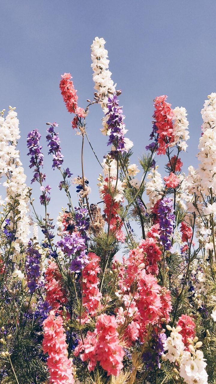 Aesthetic Spring Flowers Wallpapers | HD Background Images ...