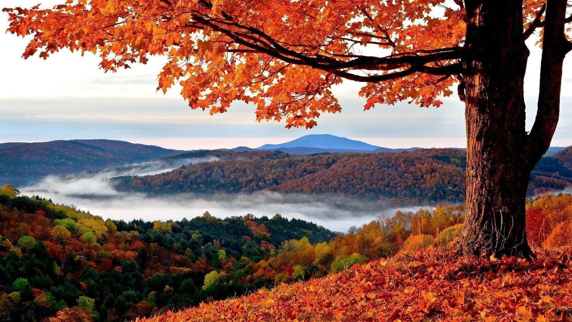 1920x1080 HD Autumn Wallpapers | Backgrounds | Photos | Images | Pictures |  YL Computing
